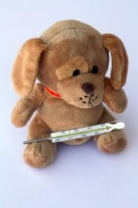 teddy-242862_1280